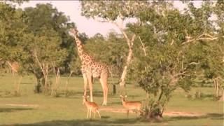 המדריך לתייר בגלקסיה - דרום טנזניה עם שלמה כרמל