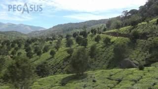 טיול מאורגן לדרום הודו עם פגסוס