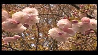 טיול מאורגן ליפן - קיוטו