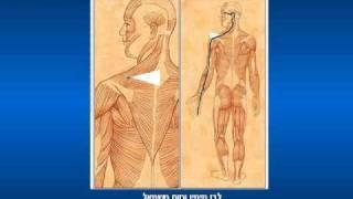 Pivromialeya- כאב כרוני - פיברומאלגיה שווה צפייה